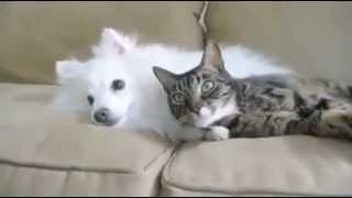 Dog + Cat + Hedgehog = Cuuuuute