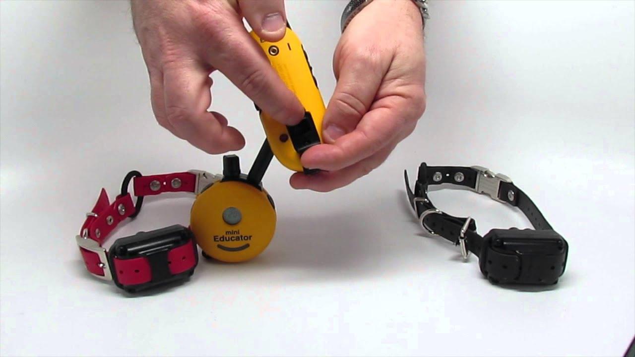 E Collar Technologies Ez 900 Educator Vs Mini Educator