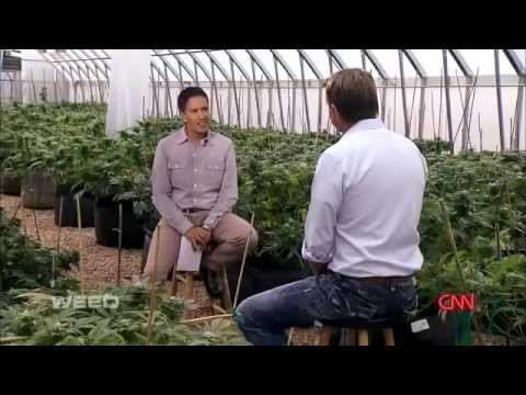 WEED The CBD Secret is out! A CNN Special Report by Dr  Sanj