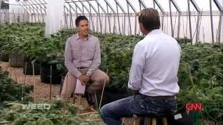 WEED The CBD Secret is out! A CNN Special Report by Dr  Sanjay Gupta