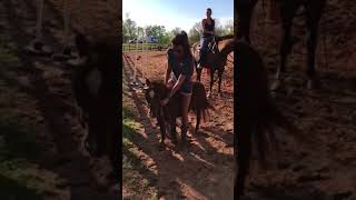 Miniature Pony Bolts And Tosses Woman To Ground - 988192