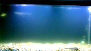 day 1 uv sterilizer 150 gallon amazon tank