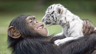 15 Unbelievable Unlikely Animal Friendships!