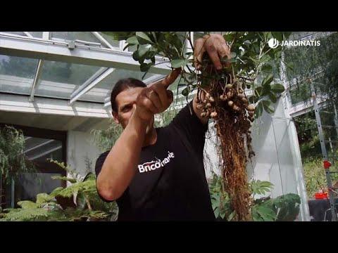 La Planta Del Cacahuete Bricomanía Jardinatis Youtube