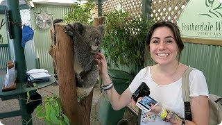 Petting Koalas in Sydney! | Evan Edinger Travel