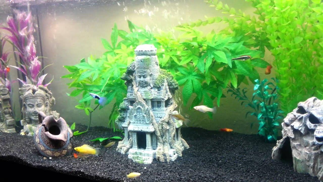 Fish for asian aquarium - Ancient Mystical Temple Ruins Tropical Aquarium