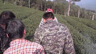 Taiwan Tea Plantation - Cultivating Tea | Tea Pursuit