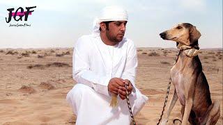 Arabian Saluki  Royal Hunter