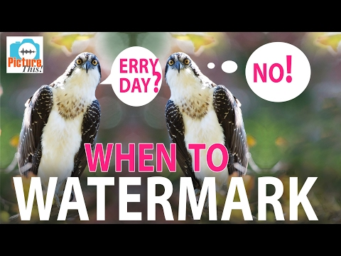 When to Watermark: Picture This! Podcast