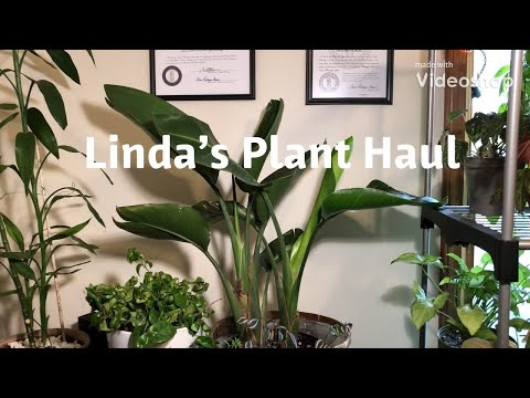 Linda's Plant Haul! What treasure did I find today! Share Please.