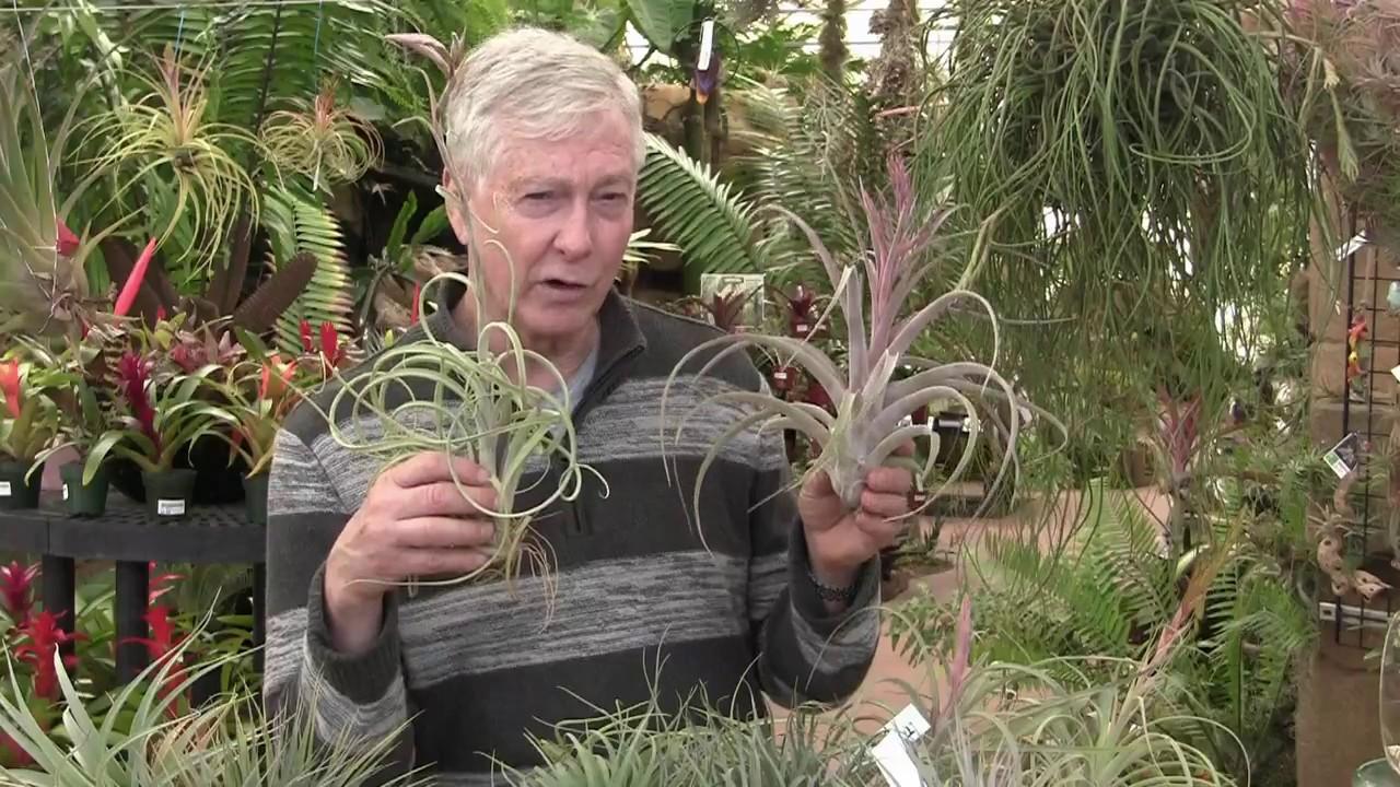 Paul Isley Rainforest Flora Inc Tilly Talks Blooming