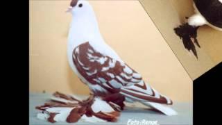güzel güvercinler