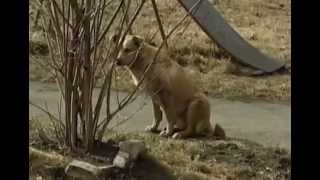 Контракт на отлов бродячих собак перепишут
