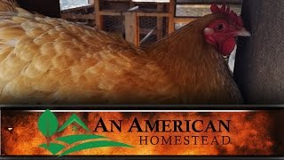 Chicken Coop Walkthrough - An American Homestead
