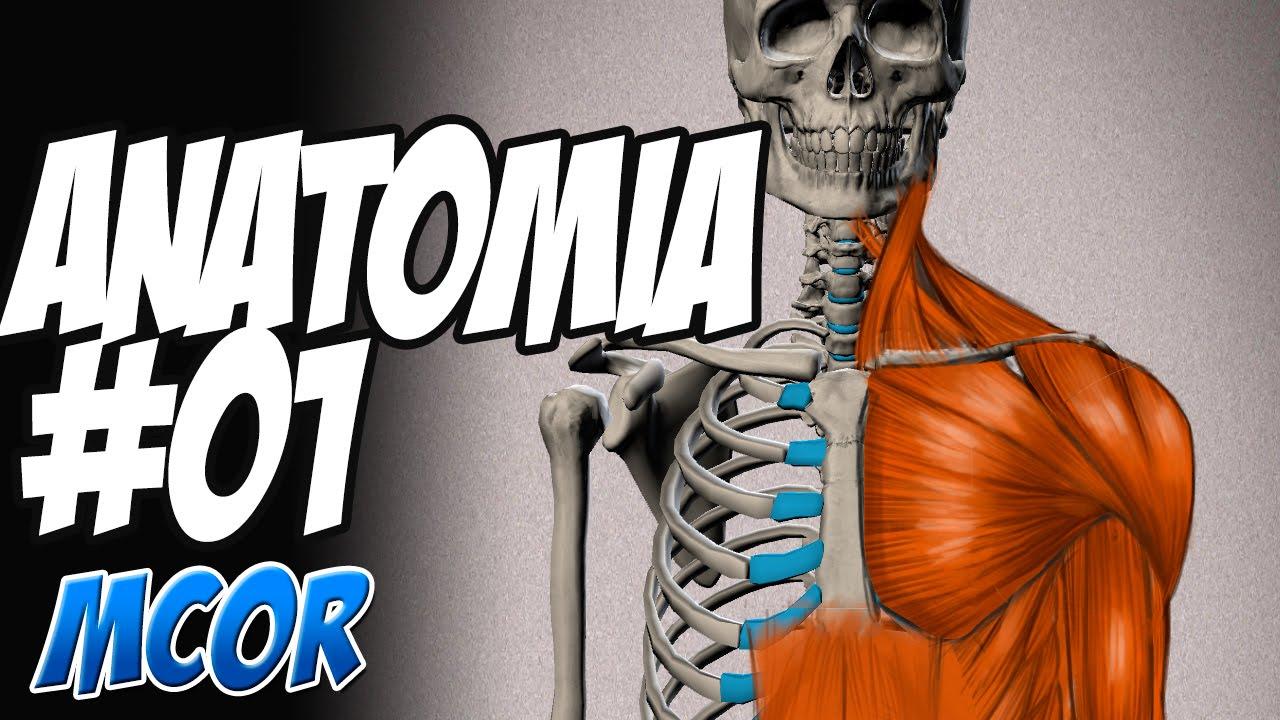 Estudio de la Anatomía Humana | #01 - YouTube