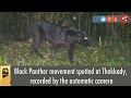 Black Panther movement spotted at Thekkady, recorded by the automatic camera