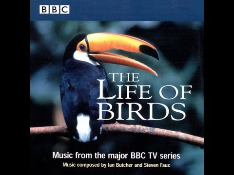 The Life of Birds  1998  Ian Butcher & Steven Faux