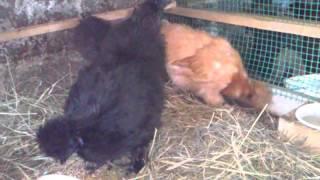 Starszaki, średniaki, najmłodsze kurczęta  ;)