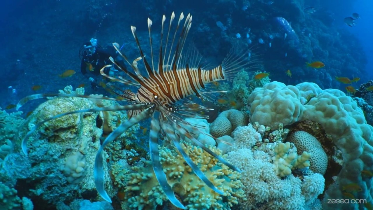 Scuba Diving In Southern Red Sea Of Egypt