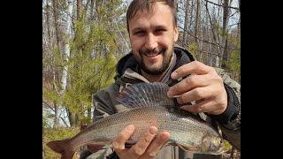 Рыбалка на горной реке Открытие сезона 2021 Огромный хариус