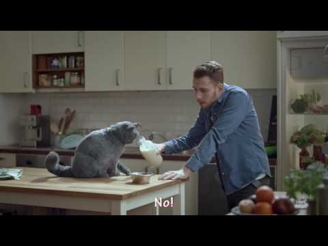 Talking Cat - Funny Commercial (Belgium)