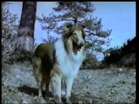 Lassie - The Painted Hills (1951)