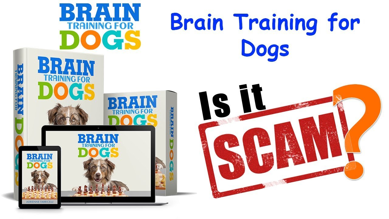 Buy Brain Training 4 Dogs Obedience Training Commands  Fake Amazon