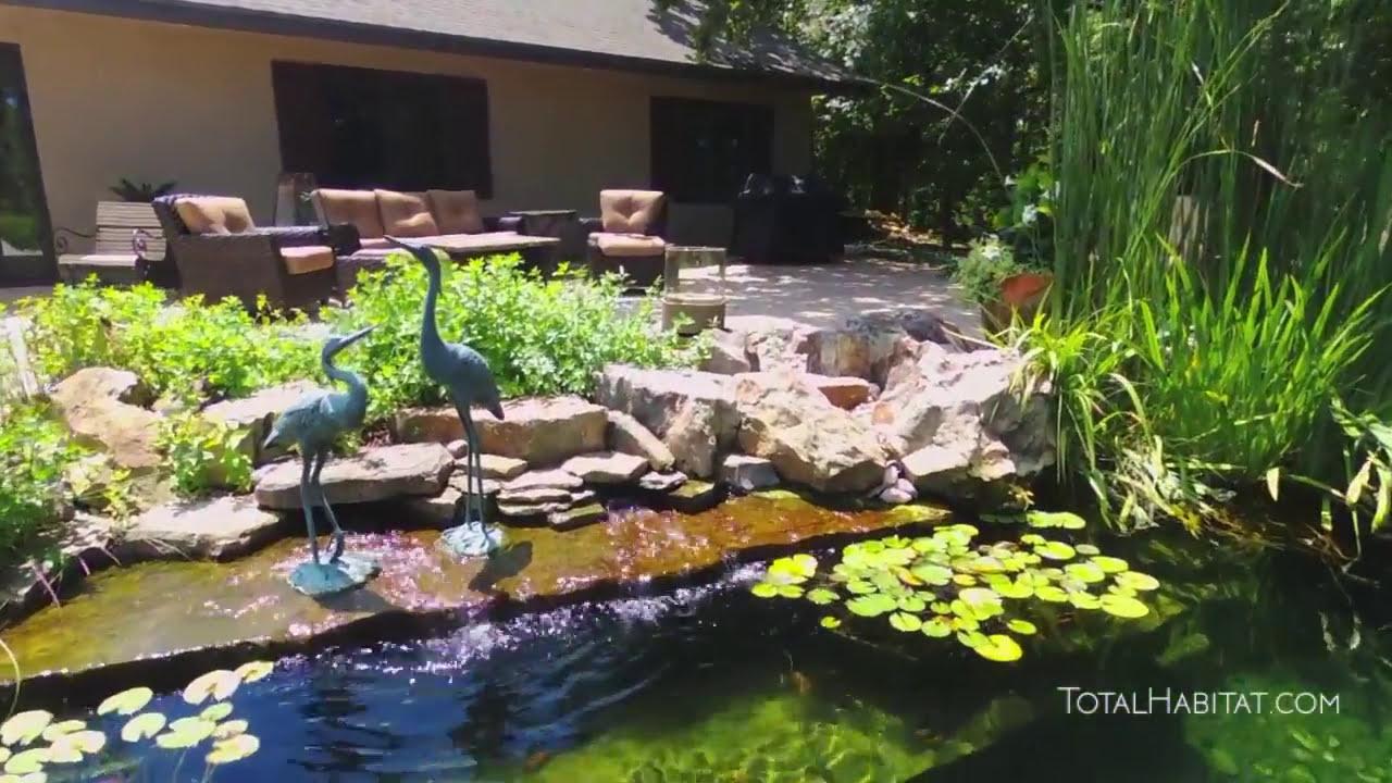 Infinity Edge Natural Swimming Pool Youtube