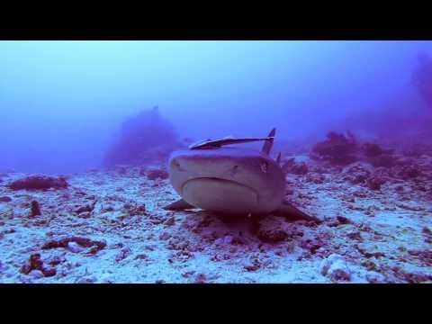 Sipadan Diving Adventures