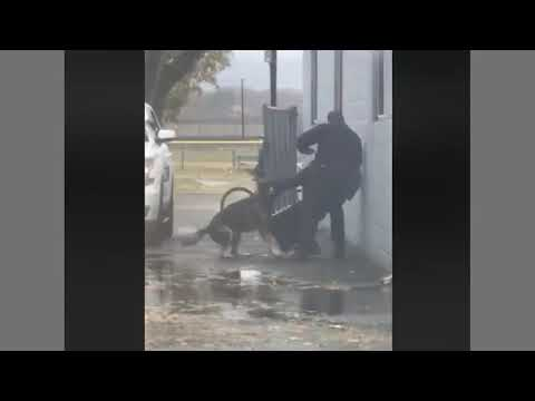 Police K9 Saves His Scared Handler - Some Good & Bad Here