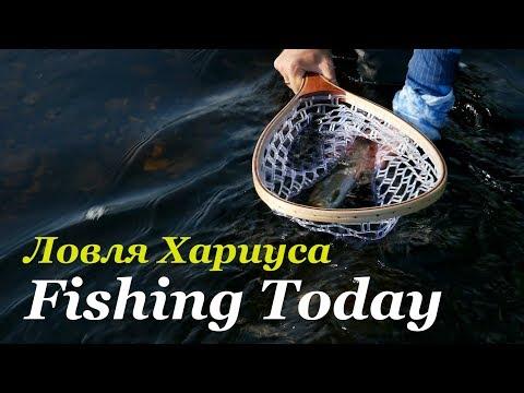 Погнали за хариусом! Ультралайт - спиннинг. Снасти, приманки, проводки! - Fishing Today