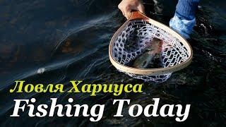 Рыбалка на ультралайт. Ловим хариуса. Снасти, приманки, проводки! - Fishing Today