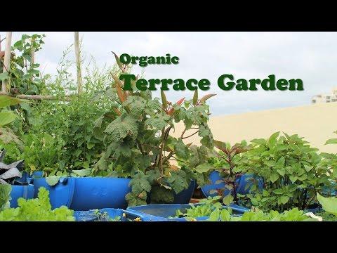 Organic Terrace Garden - English