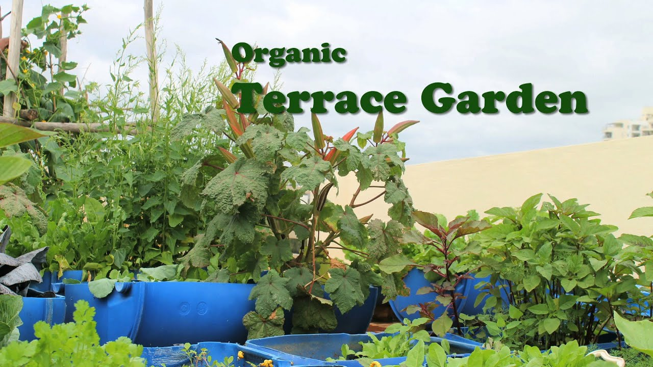 Organic terrace garden english doovi for Terrace krishi