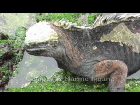 G Adventures - Galapagos Islands