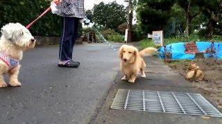 お散歩します.