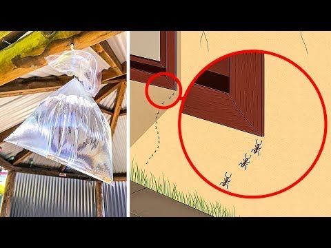 10 Maneras de deshacerte de los insectos en tu hogar