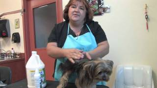 Curing Dry Dog Skin