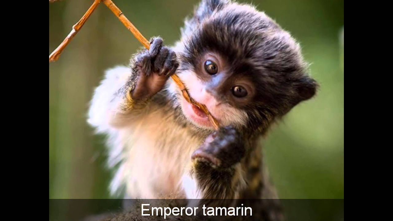 exotic animals around the world Momtastic webecoist | strange nature, rare animals & weird world here are some of the most exotic and to a great many purposes every day around the world.