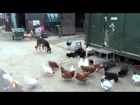 All Friends Together In The Stable Yard.