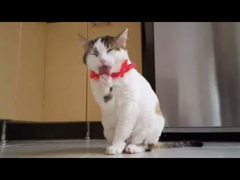 Cats Cleaning Themselves - Very Cute - Must Watch