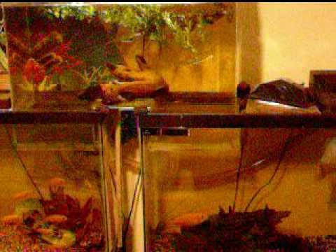 How To Connect Two Fish Tanks Aquarium Expander Awesome
