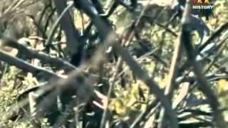 Repeat youtube video [สารคดี 13] หน่วยรบเงากระสุนมัจจุราช