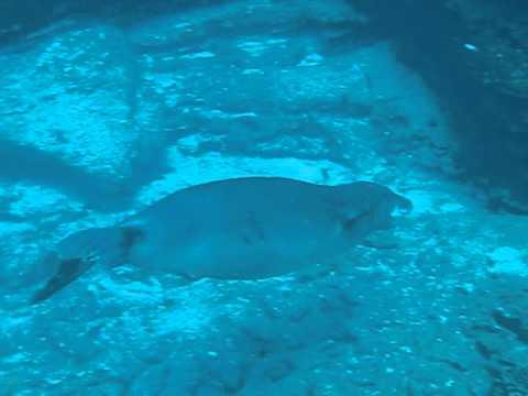 Seal Hawaii