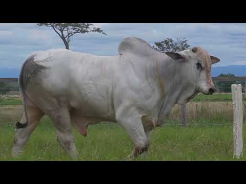 LOTE 026   GPO A 2927