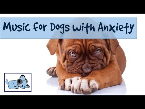 DOG MUSIC - RELAX YOUR DOG! UNIQUE SOUND TECHNOLOGY Rel ... Relaxing Dog Music 6 Hour