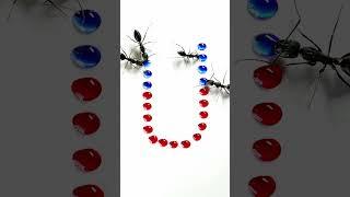 Ants VS Letter - U