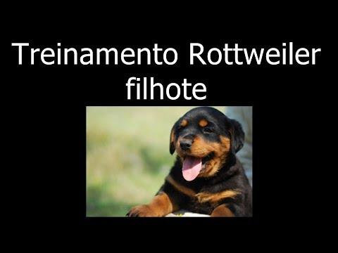 Treinamento – Filhote de Rottweiler