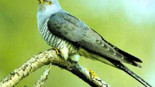 Auf einem Baum ein Kuckuck - The King