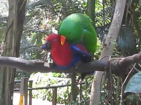 Sex bird love